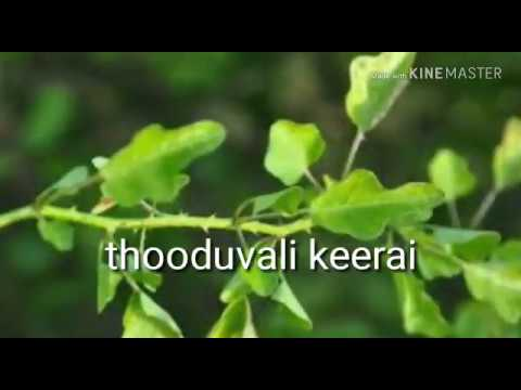 thooduvalai thuvayal recipe in tamil for cold and cough