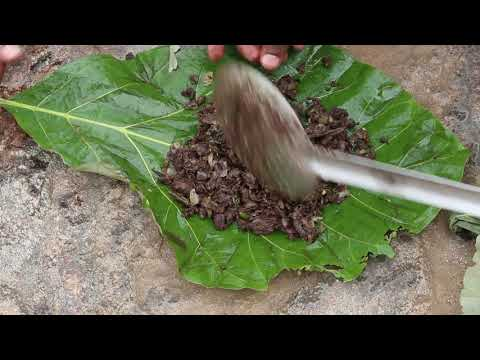 ஆட்டு இரத்த பொரியல் | Mutton Blood Fry Recipe | Mutton Blood Fry in Tamil | Mutton Recipes in Tamil