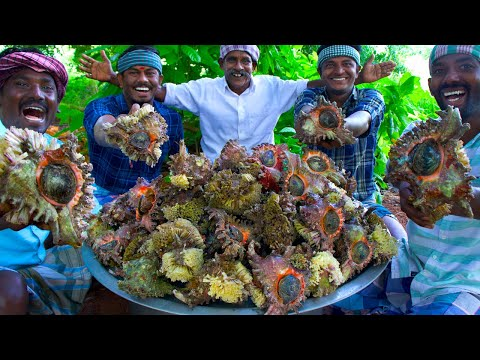 CONCH Cooking & Eating   Sangu Kari   How to Cook Conch   Rare Seafood Item Cooking In Village